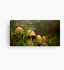 Annual Secret Society for Mushrooms Canvas Print
