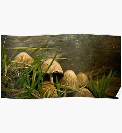 Annual Secret Society for Mushrooms Poster