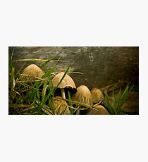 Annual Secret Society for Mushrooms Photographic Print