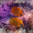 Red Sea Masked Butterflyfish With Winter Season Frames by hurmerinta