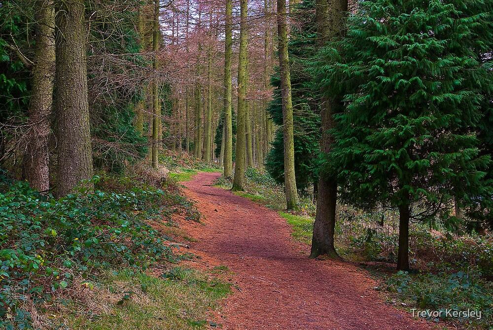 Walk Through The Trees by Trevor Kersley