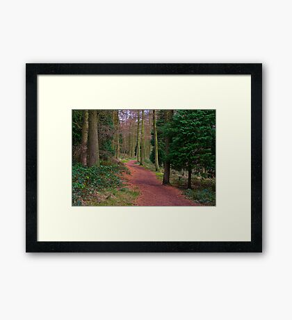 Walk Through The Trees Framed Print