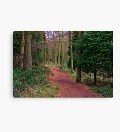 Walk Through The Trees Canvas Print