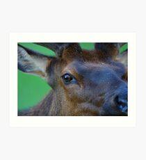 Eye of the Elk Art Print