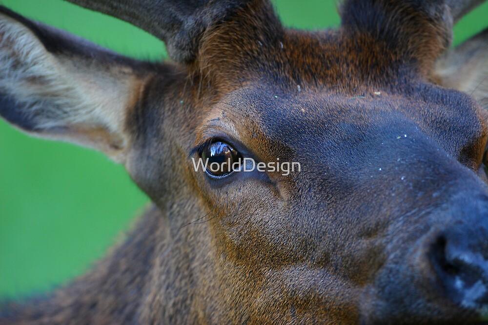 Eye of the Elk by WorldDesign