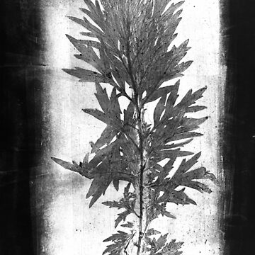 black and white wormwood by denisovanv