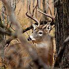 8 Point Buck by Larry Trupp