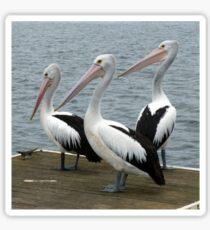 Pelicans Sticker
