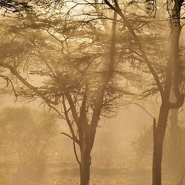 Dusty light by pvb25