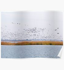 Fall Migration Poster