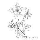 Colorado Rocky Mountain Columbine By Journey Home Made by JourneyHomeMade