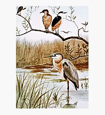Herons Vintage Art Photographic Print