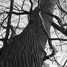 Twisted Tree by hidden-design