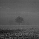 Foggy Tree by hidden-design