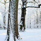 Two Snow Covered Trees by Alyson Fennell