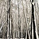 Snowy Winter Trees by Alyson Fennell