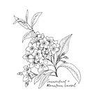 Mountain Laurel Connecticut State Flower by Journey Home Made by JourneyHomeMade