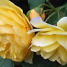 Yellow Bells by karuna