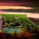 Old Iowa Barn by Tim Wright