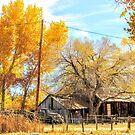 A Ranchers Life by marilyn diaz