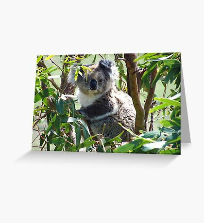 Wild Koala Greeting Card