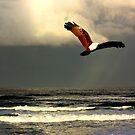 Storm Hawk by byronbackyard