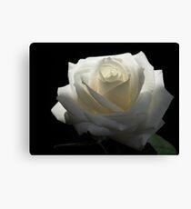 White White Rose Canvas Print