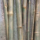 Bamboo by ScenerybyDesign