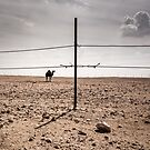 Rural Qatar ... by Michiel de Lange