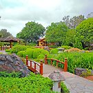 Japanese Gardens Gosford NSW by Doug Cliff