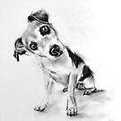 curious dog by Denny Stoekenbroek