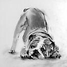 little bulldog by Denny Stoekenbroek