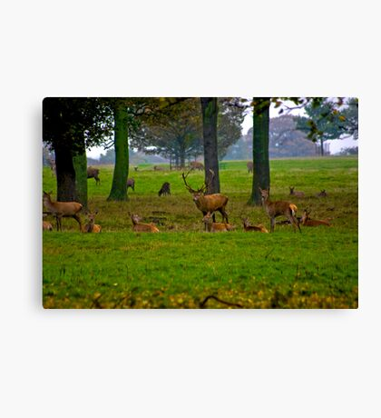 Woodland Scene - Red Deer Canvas Print