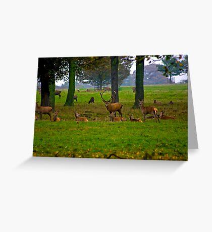 Woodland Scene - Red Deer Greeting Card