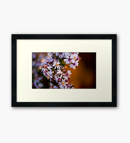 Tiny bouquet in the morning Framed Print