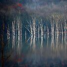 November Light by Mary Ann Reilly