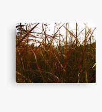 Coloured Grasses Canvas Print