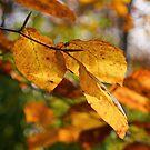 Autumn colour by Sue Frank