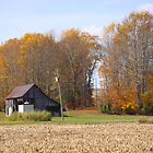 Little Barn in autumn by Pauline Evans