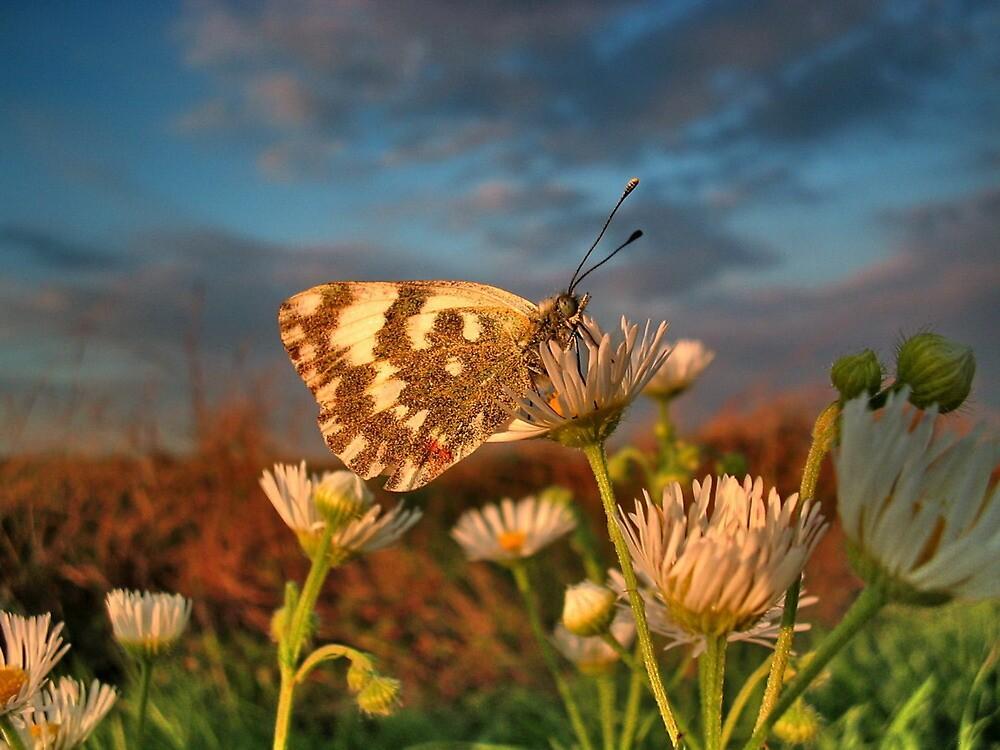 Portrait of the Butterfly,landscape by robertpatrick