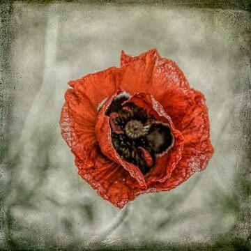 We Will Remember by PhotosbySylvia