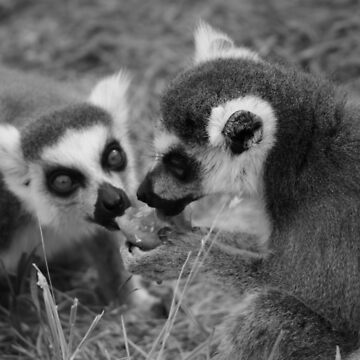 Sharing A Moment - Feeding Time With The Lemurs by PathfinderMedia