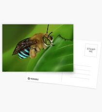 Blue-Banded Bee Postcards