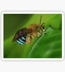 Blue-Banded Bee Sticker