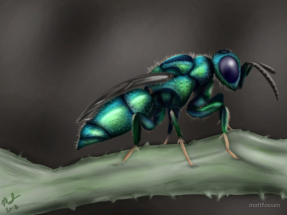 Cuckoo Wasp by mattfossen
