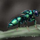 Cuckoo Wasp by mattfossen