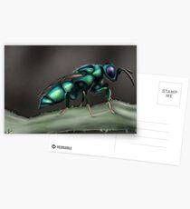 Cuckoo Wasp Postcards