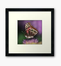 American Painted Lady Butterfly Framed Print