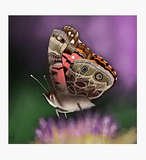 American Painted Lady Butterfly Photographic Print