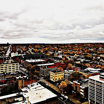 Fall in Albany  by cathpinc